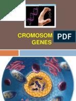 Cromosomas y Genes