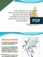 fisiologiarodilla-090715173829-phpapp01