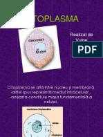 Cito Plasm