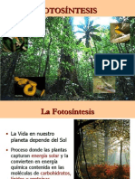 CLASE 08 - FOTOSINTESIS2.ppt