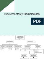 Bioelementos y Biomoléculas - copia