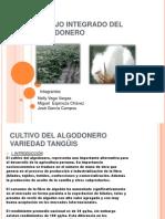 Manejo Integrado Del Algodonero