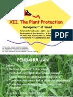 Dbt 12 - Weed & Weeding
