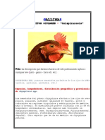 Parasitos Oculares - Gallinas