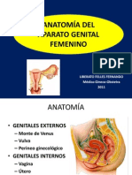 ANATOMIA Genital Femenino
