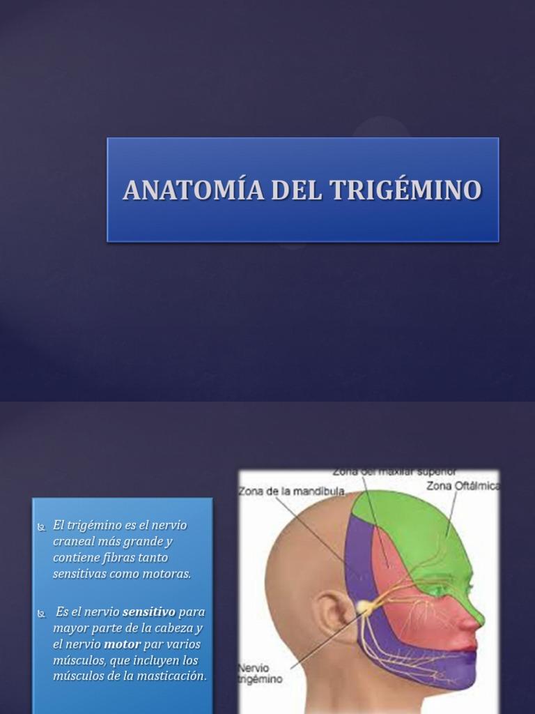 SEMIOLOGIA DEL TRIGEMINO