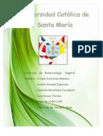 Vegetal-Informe Tercera Fase