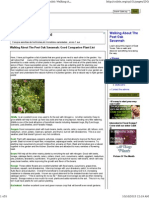 Good Companion Plant List
