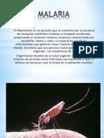 Malaria Rosa