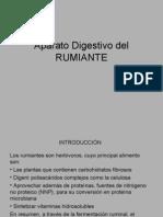 Aparato Digestivo Del RUMIANTE