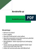 Bordetella Sp