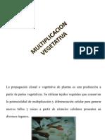 PROPAGACION VEGETATIVA.pptx