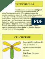 presentacintiposdecorolas-101108060611-phpapp02