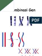 12 Rekombinasi Gen