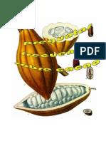 Biofabricas Para Cacao