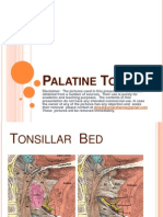 Throat Pharynx Palatine Tonsils ENT Lectures
