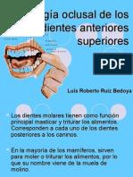 Morfología oclusal de los dientes anteriores superiores