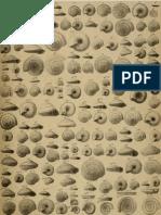 I molluschi dei terreni terziari del Piemonte e della Liguria; F. Sacco, 1892 - PARTE 12 - Paleontologia Malacologia - Conchiglie Fossili del Pliocene e Pleistocene