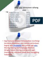 Morfologi Gigi Permanen Rahang Atas