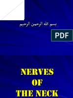 Nerves of the Neck