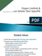 4. Organ Limfoid