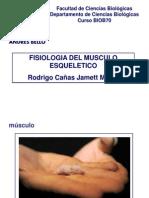 Fisiología Músculo Esquelético   2013 (1)