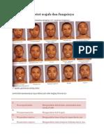 Otot-otot wajah.docx