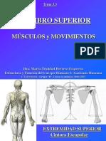 Miembro Superior - Musculos Y Movimientos