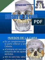 6. Huesos de La Cara