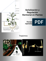 Fitohormonas 2013 Fernanda Pérez