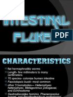 Intestinal Flukes Ppt