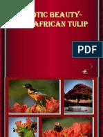 Laleaua africana