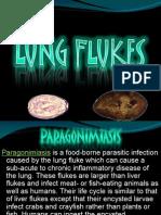 Lung Flukes Pamatmat
