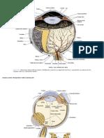 Sistema Fotoreceptor y Audioreceptor
