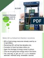 132252584 Algae Cultures