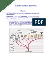 6. E.P. G. Filogenia