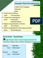 6. Sympetalae