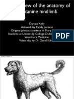 Anatomy of the Canine Hindlimb