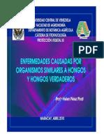 Hongos Verdaderos y Org Similares 2010