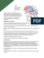 Sistema Nervoso10