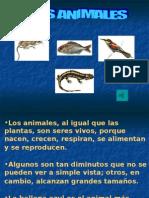 ANIMALES- CUARTO
