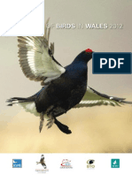 RSPB state of birds in Wales