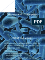 viruses  bacteria