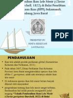 PP. Teknik Pembenihan Ikan Lele Mesir (Clarias Gariepinus