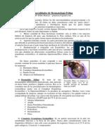Dermatología-felina