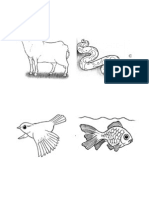 Different Animal Parts