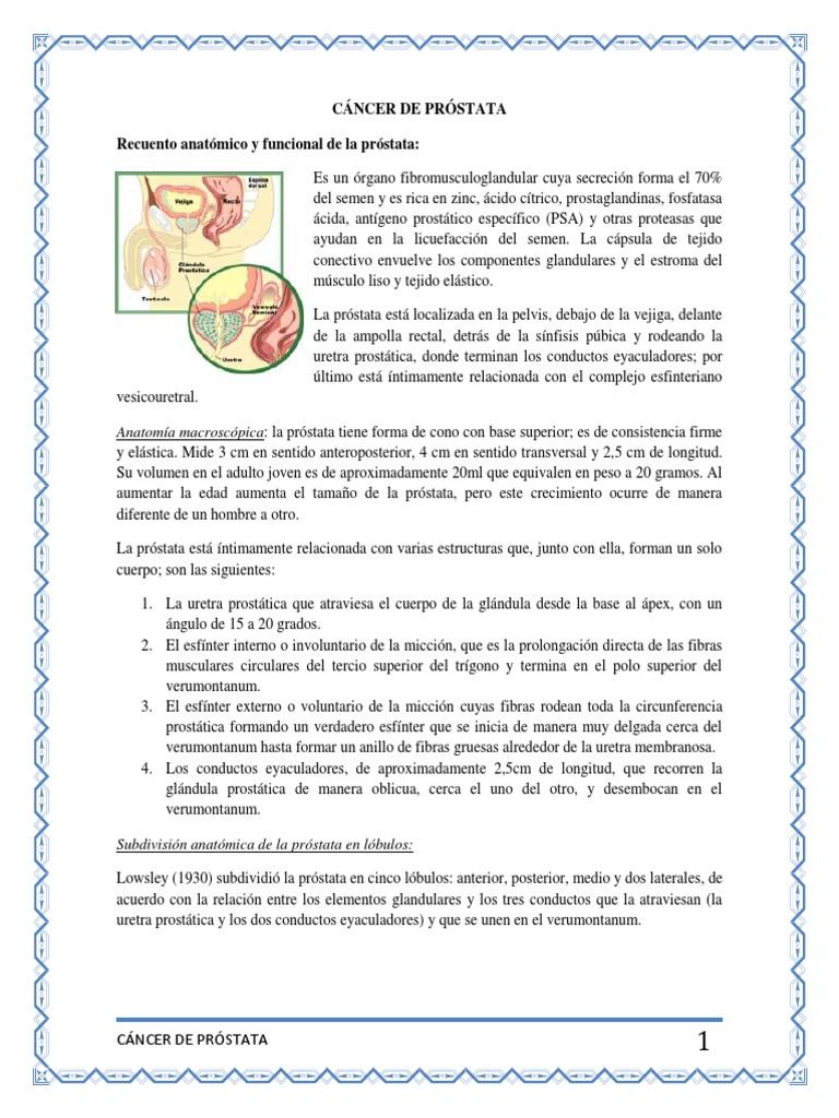 Magnífico Lóbulos De La Próstata Anatomía Ilustración - Imágenes de ...