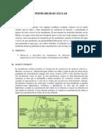 Informe de Permeabilidad de Celular[1]
