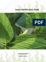 Soybean Insect Identification Guide