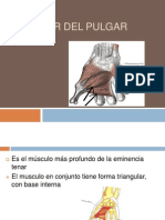 Aductor Del Pulgar-1